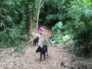 Kerry with Bob, Marley and Foster on a jungle walk