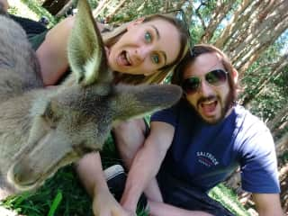 Us chilling with Kangaroos at Australia Zoo
