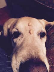 Marley...do I have peanuts on my head?