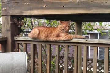 Our boy Cheetoh lounging on the deck