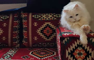Majlis with Benson