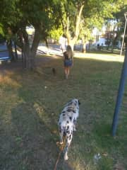Afternoon walk in the park with Keylo (funniest Sausage Dog) and Rockyto ( cute dalmatian dog)