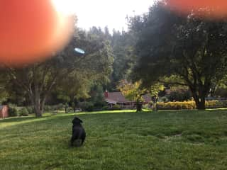 Frisbee with Lu!