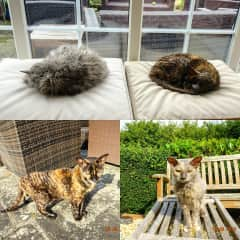 The 2 cats Bella & Suki, we looked after in Lodsworth, Sussex
