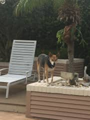 King of the yard