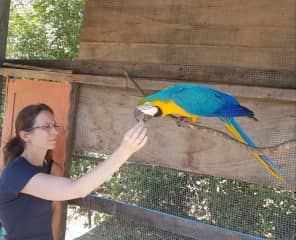 Roberta and the blue macaw rescued