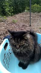 Ferdinand helping to hang out the Washing