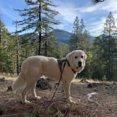 A local hike with Crosby.