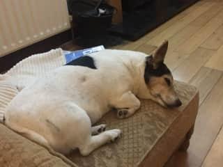 Poppy sleeping on her favourite footstool