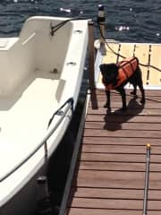 Vinny waiting for his boat ride!