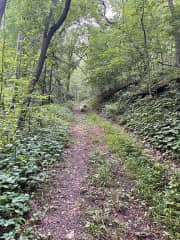 The old logging road down to the St Croix River, Oak will show you the way…