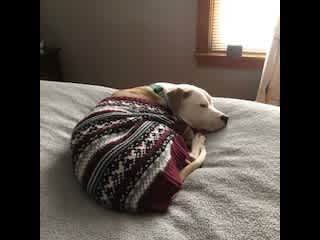 Freya is not a fan of Chicago winters and prefers to be inside with her cozy sweater.