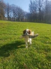 Ruby Loves her sticks