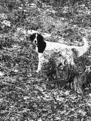 Demelza in her woods