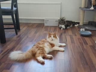 Jangles and Freya