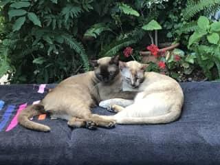 Samson and Lila