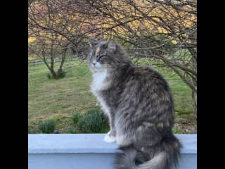 Virginia house-sit: cat-sitting for 2, in a lush rural paradise of plants and flowers