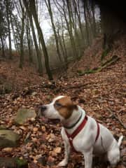 Toti out in the forest
