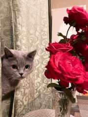 My cat Alisa❤️