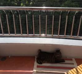 Olu chilling on his balcony