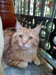 One of his favourite places is the balcony. He loves the fresh air and to feel the sun!