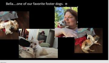 Bella our favorite foster dog