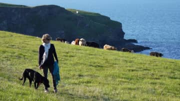 Louise and Callie, and Cornwall cows.