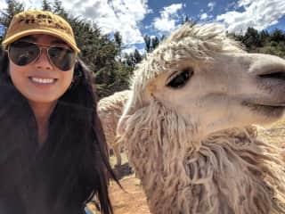 Who loves taking selfies more — Kharissa or the llama?