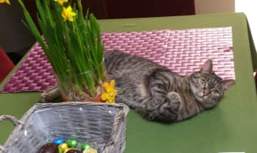 Easter for cats