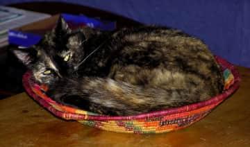 Cobweb basket-case
