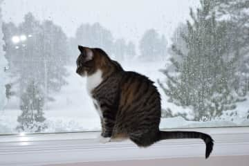 Lucy loves to look out the window, even when there is snow!