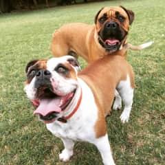 Stella and Milo