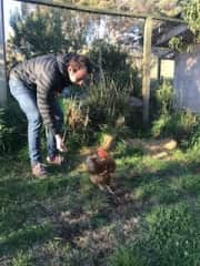 Hanging out with the chickens can be very egg-citing!