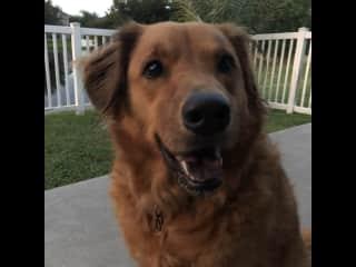 Our own dog, Chloe!