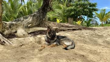 Samara at Bocas del Toro