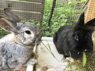 Rabbits (rescued and happy!)
