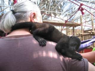Blane with Brad Pitt, a monkey we met in Costa Rica