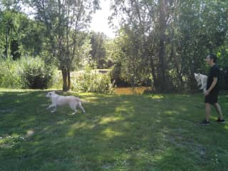 Playing fetch with Uma