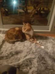 Beautiful ginger her parents,go away alot and l love looking after her.such a good cat.