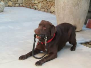 Pagi excitedly waiting for his walk in the south of France..