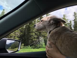 On the way to the dog park