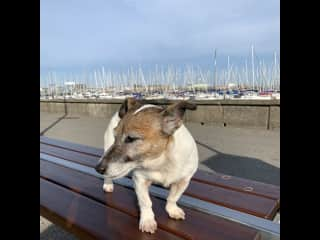 My friend Muffin from Howth Ireland