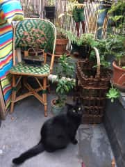 PARIS- I cat sit Pompon each time Carolyn and Samuel (an American/French couple) go away.