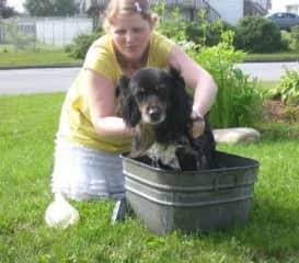 Giving my best girl a bath, Jasmine was an Australian Shepherd, and she lived to be 16