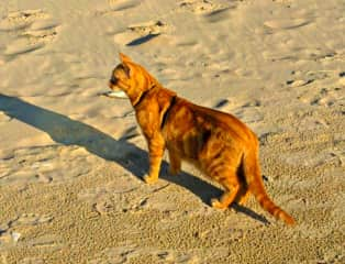 Django at the beach!