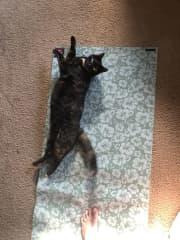 Sayaka doing her yoga