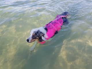 Merlin will swim for hours without a break, so we have found that putting a life vest on allows her to get all the swimming that she wants in, and reduces our anxiety of her time in the water when we are at the beach
