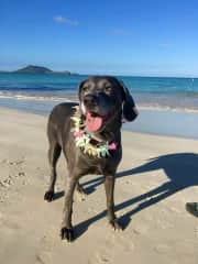 We took care of Georgia for 3 months when my son moved to Hawaii.  Georgia eventually joined him in Hawaii.