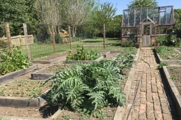 The veg garden in spring