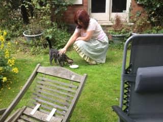 Simita taming the cat next door - 2015